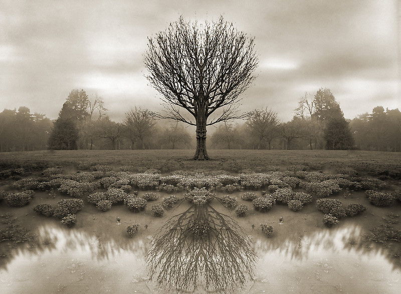 mirrored reality