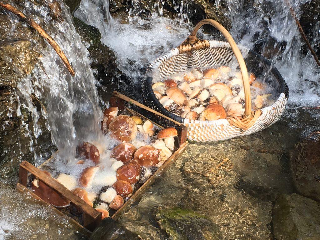 Mushrooms in river