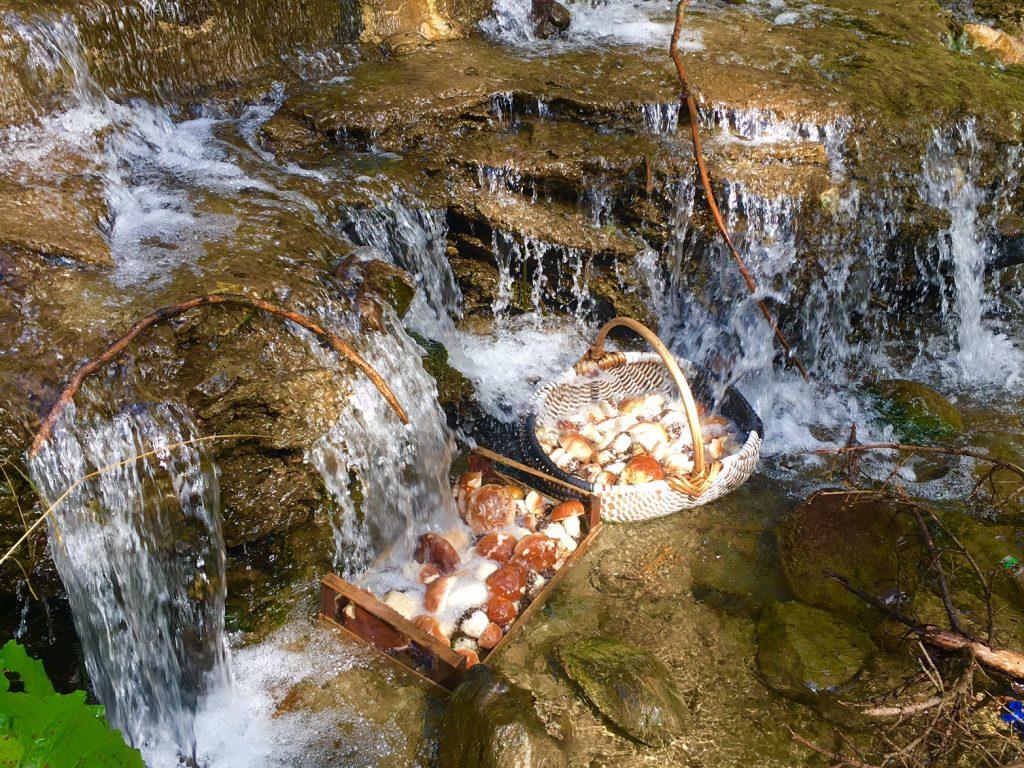 Mushrooms in river_2