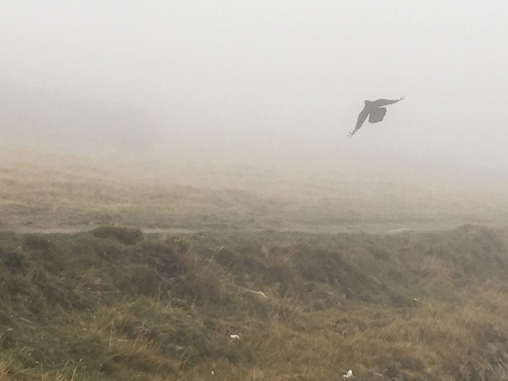 Raven in the mist