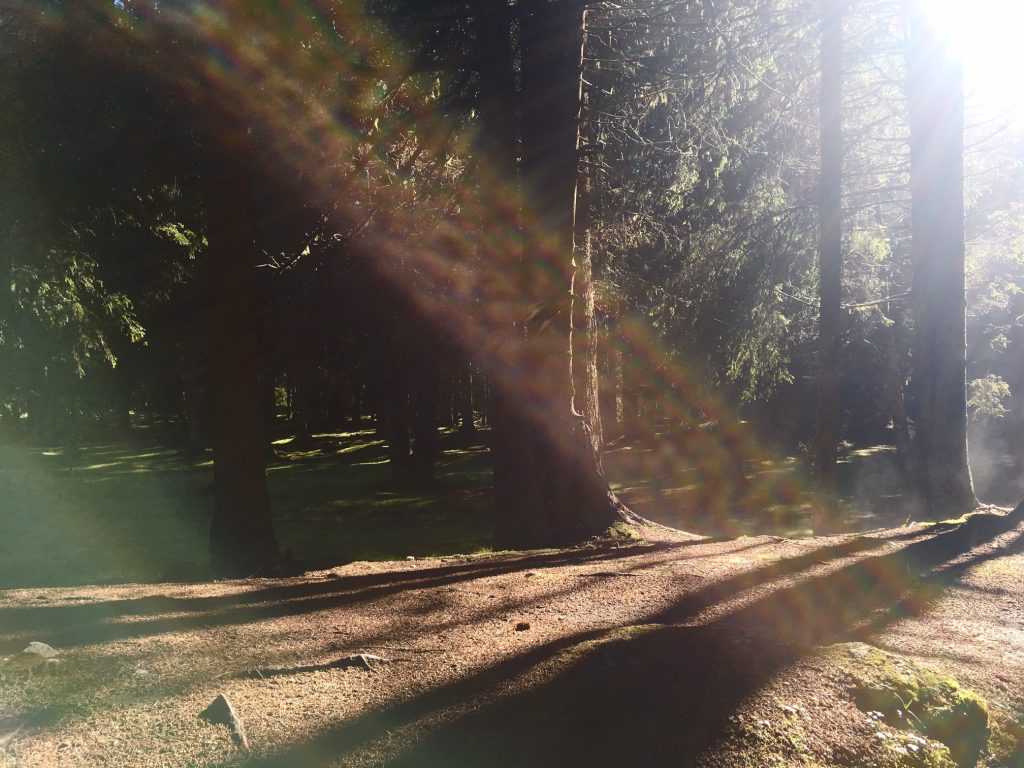 The magic of light in trees