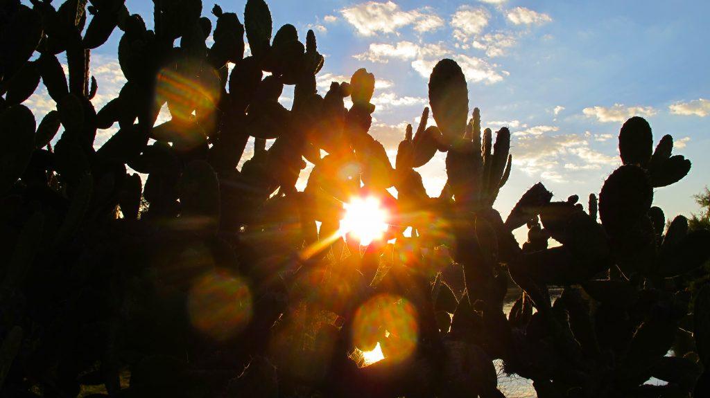 Sun through Nopal